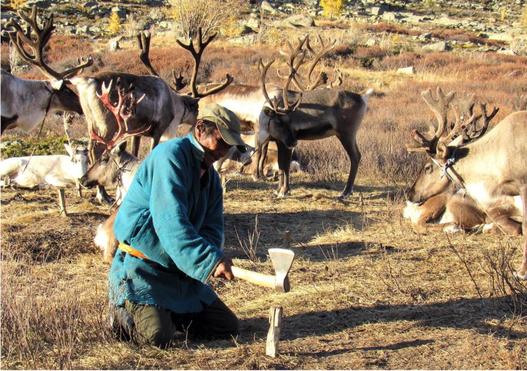 Adventure tour to Reindeer herder