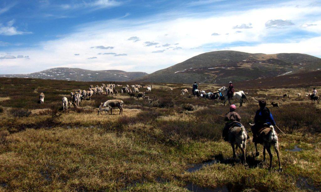 Reindeer Khovsgol Mongolia