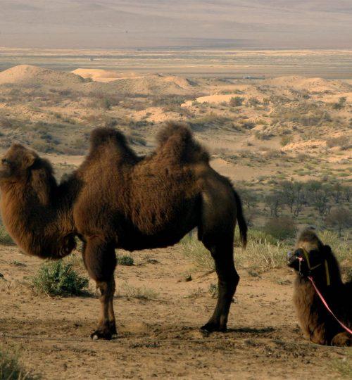 Semi Gobi | Gobi Desert