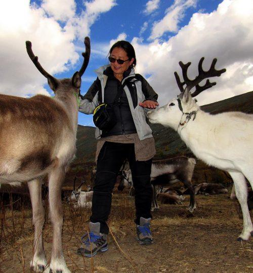 Reindeer visit