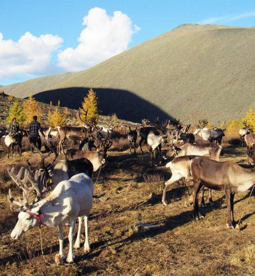 Reindeer camping